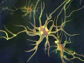 interconexao neuronal